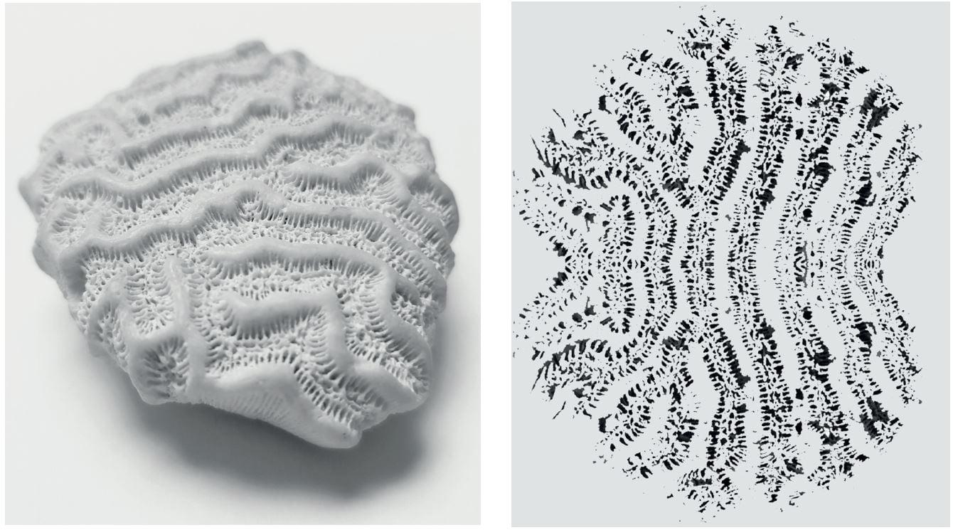 corals collage gespiegelt