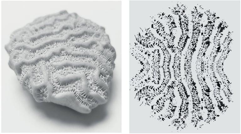 versteinerte Koralle mit gespiegeltem Abdruck