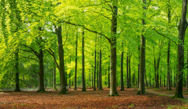 Tencel Lyocell Herstellung aus Holz aus verantwortlicher Forstwirtschaft